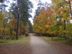 Military Road through Anagach Woods