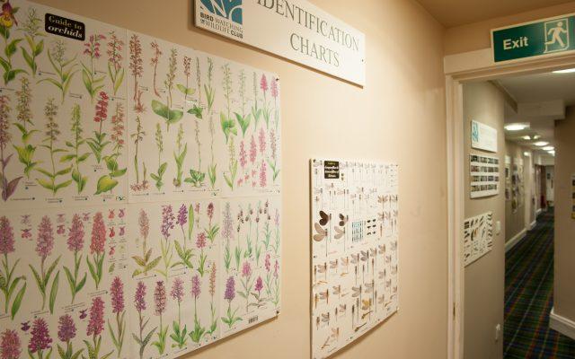 Plant identification chart Bird Watching Club Room